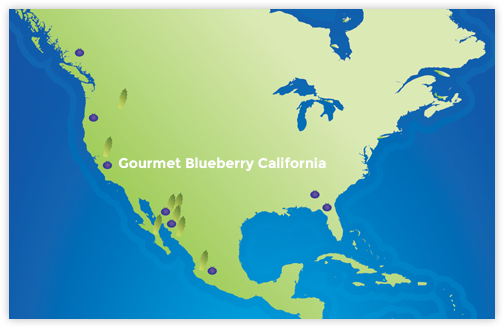 Gourmet Blueberry California