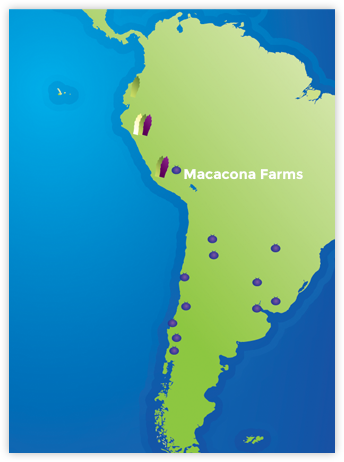 Macacona Farms